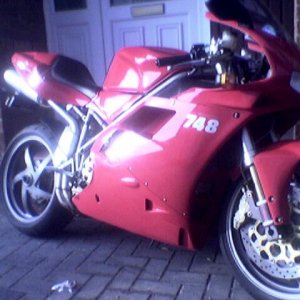 Red Ducs
